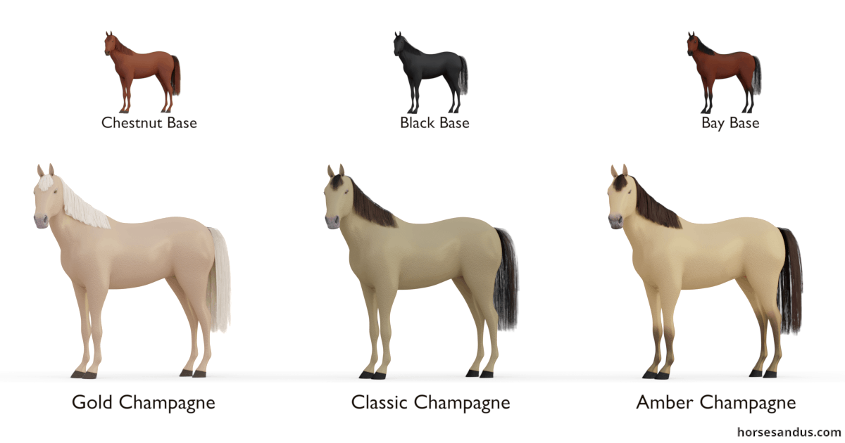 Champagne horse - Gold Champagne, Classic Champagne, Amber Champagne