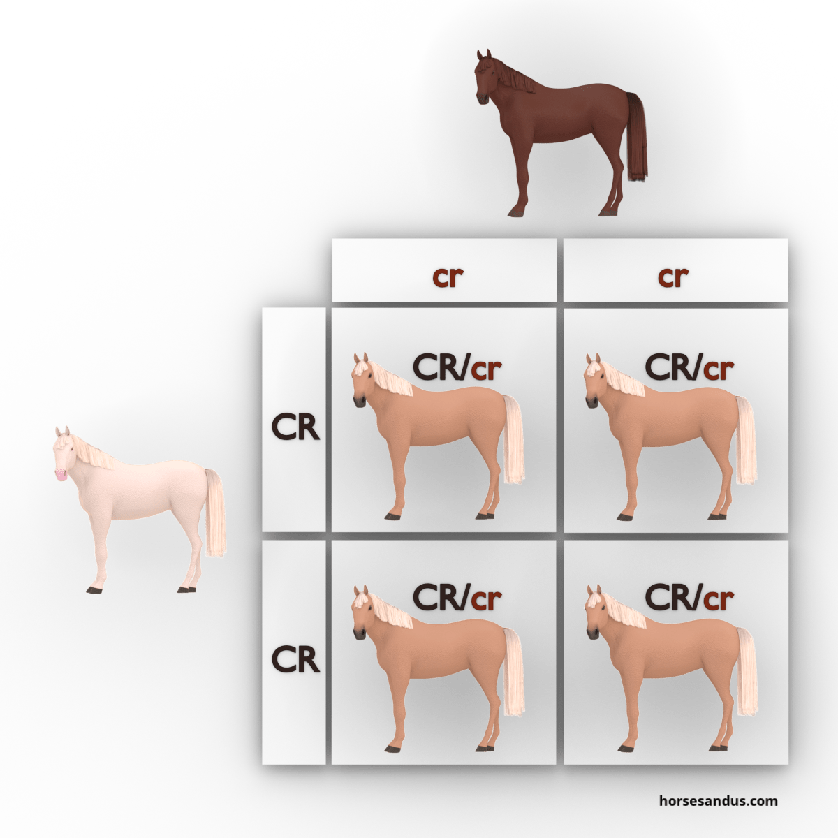 equine cream dilution gene - cremello, chestnut and palomino