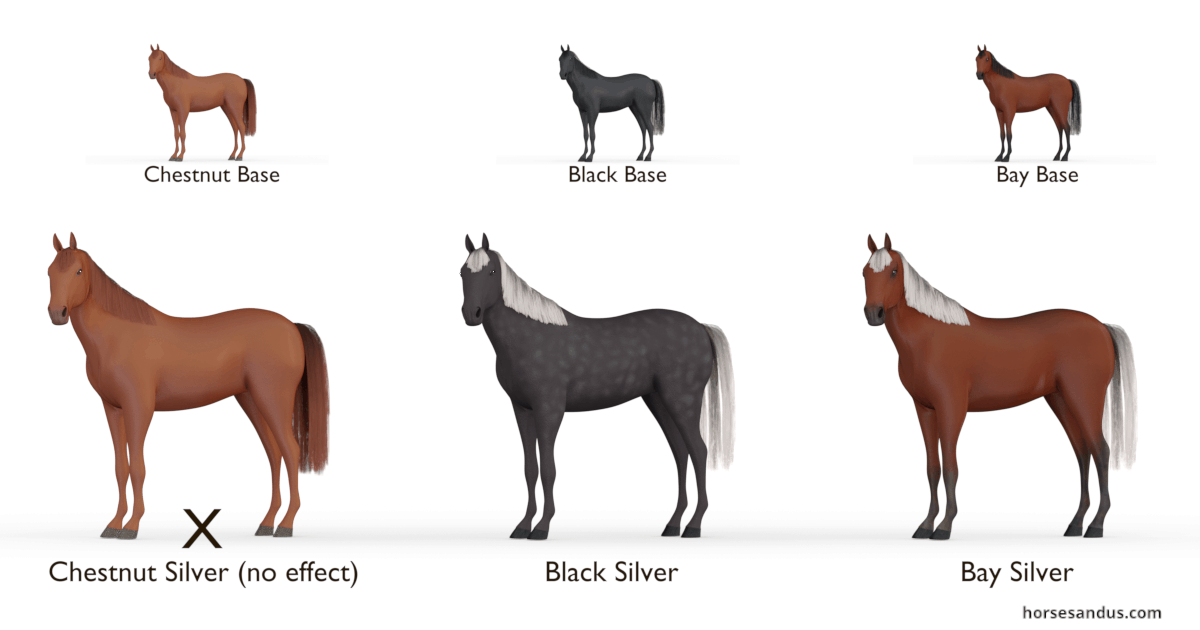 Equine Silver gene- Black Silver and Bay Silver