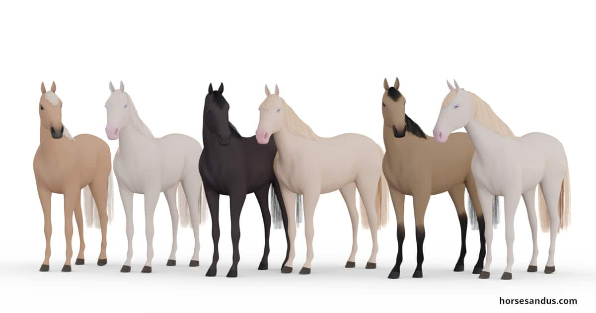 Equine colour - cream gene