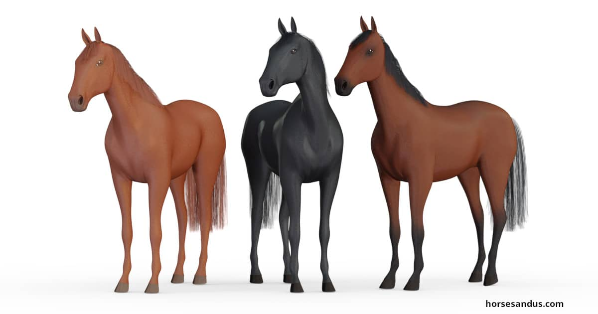 The 3 base horse coat colours