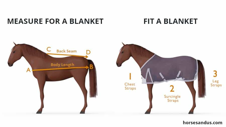 measure and fit a horse blanket