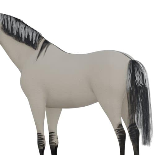 Dun horse frosting on mane and tail
