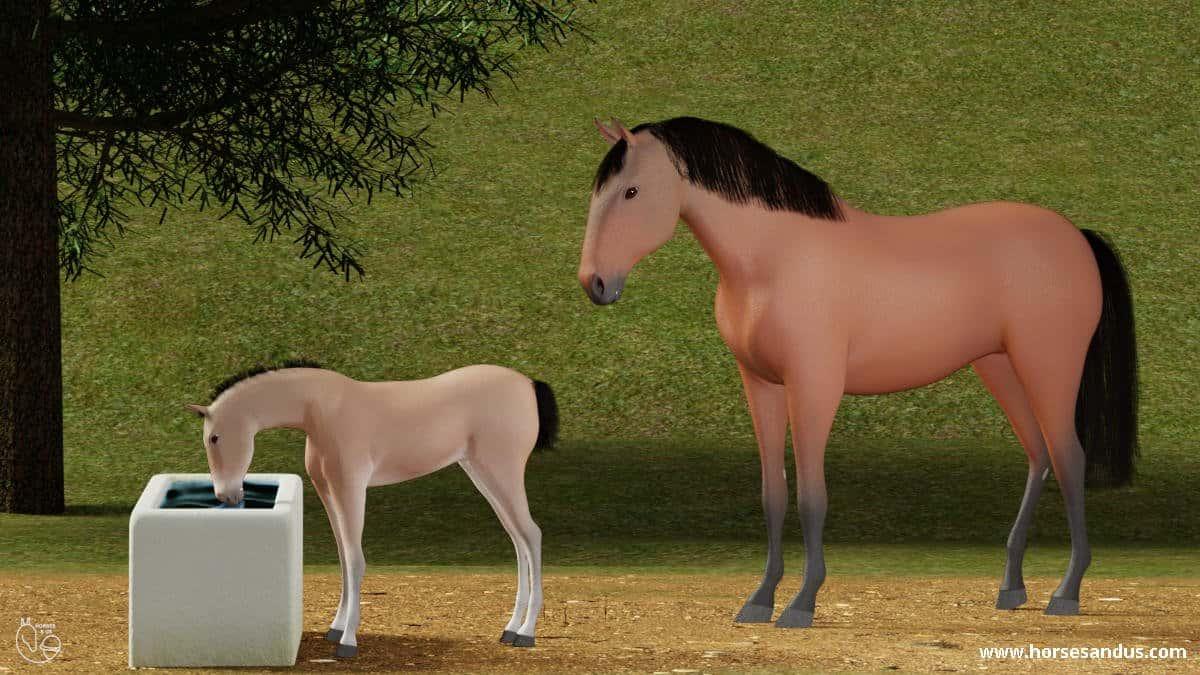 Foal drinking water