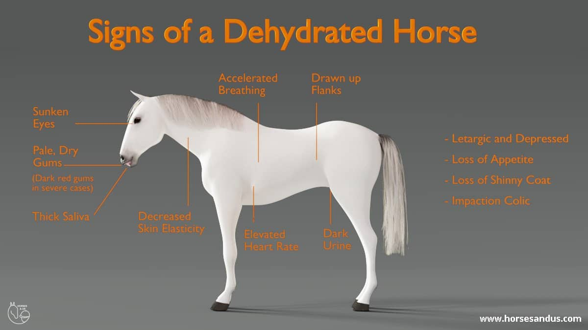signs of a dehydrated horse
