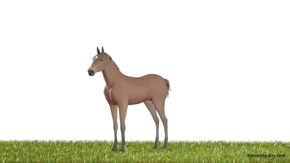 Horse life cycle - Weanling Foal