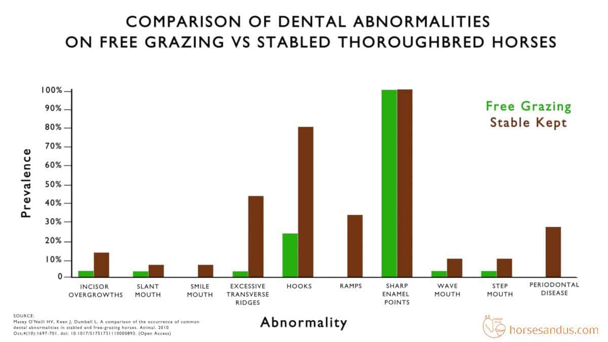 comparison of dental abnormalities on free grazing vs stabled thoroughbred horses