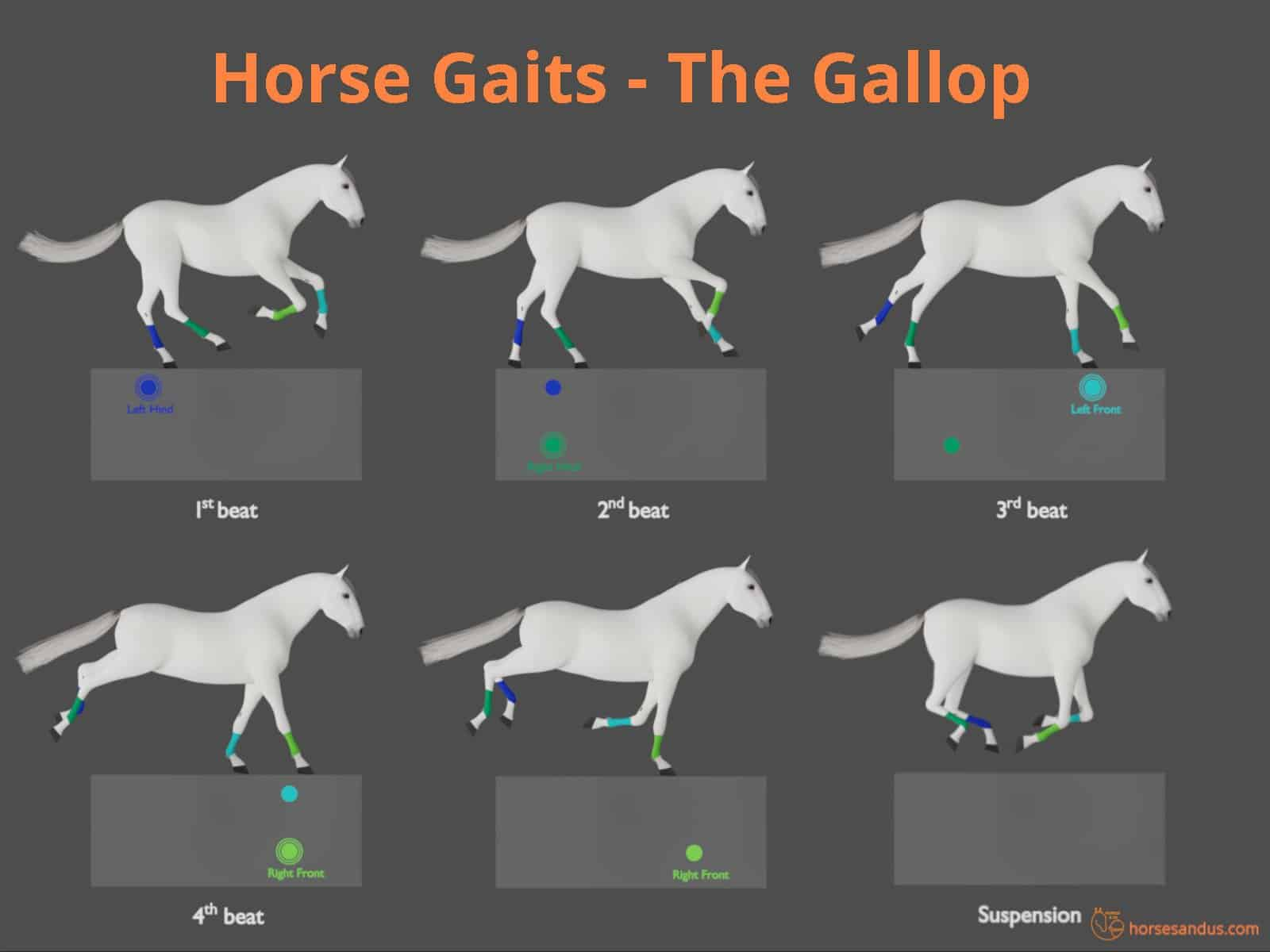 Horse gaits - the gallop cycle - diagram