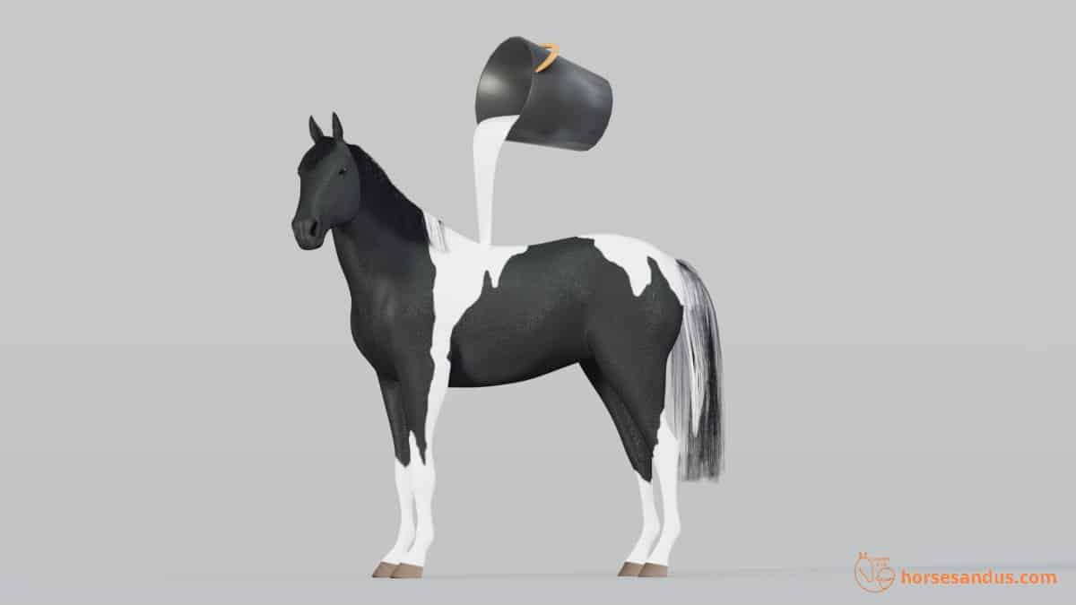 Tobiano Horse White pattern looks like bucket of white paint was poured over it