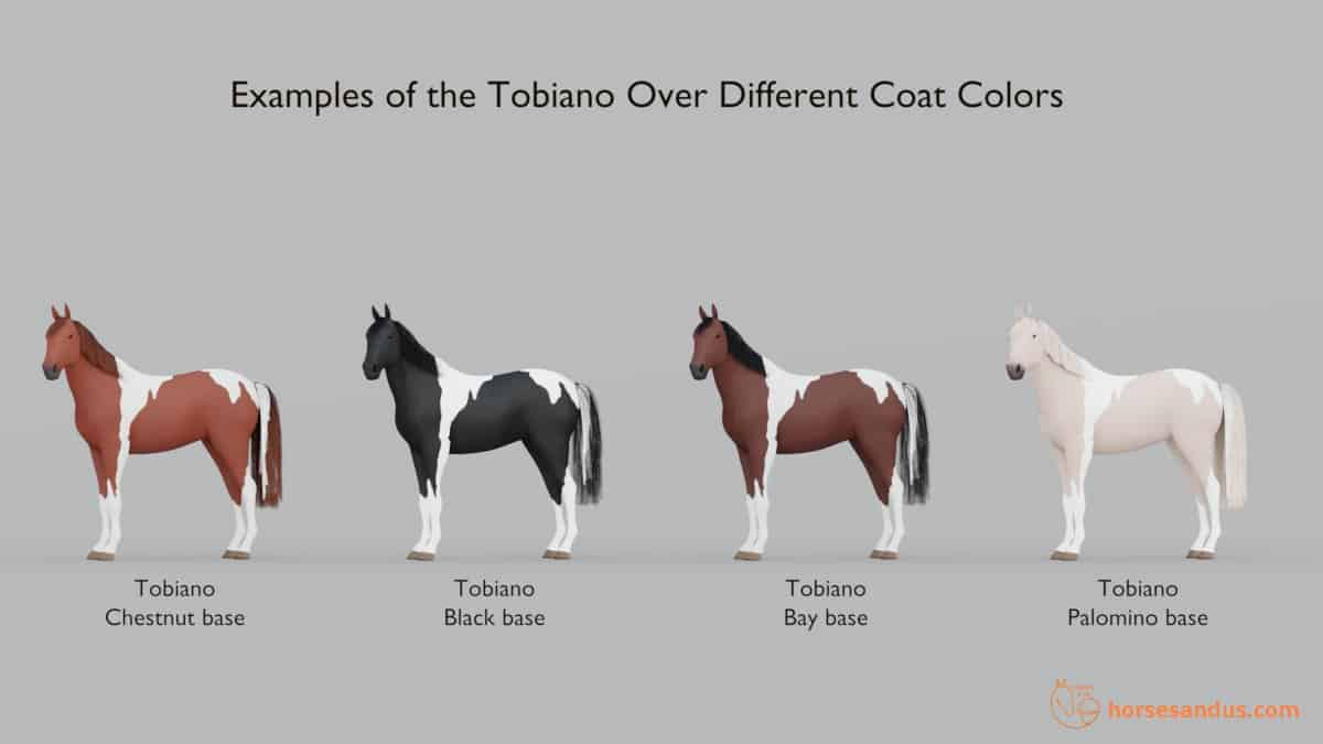 Horse Tobiano Spotting Over different coat colors