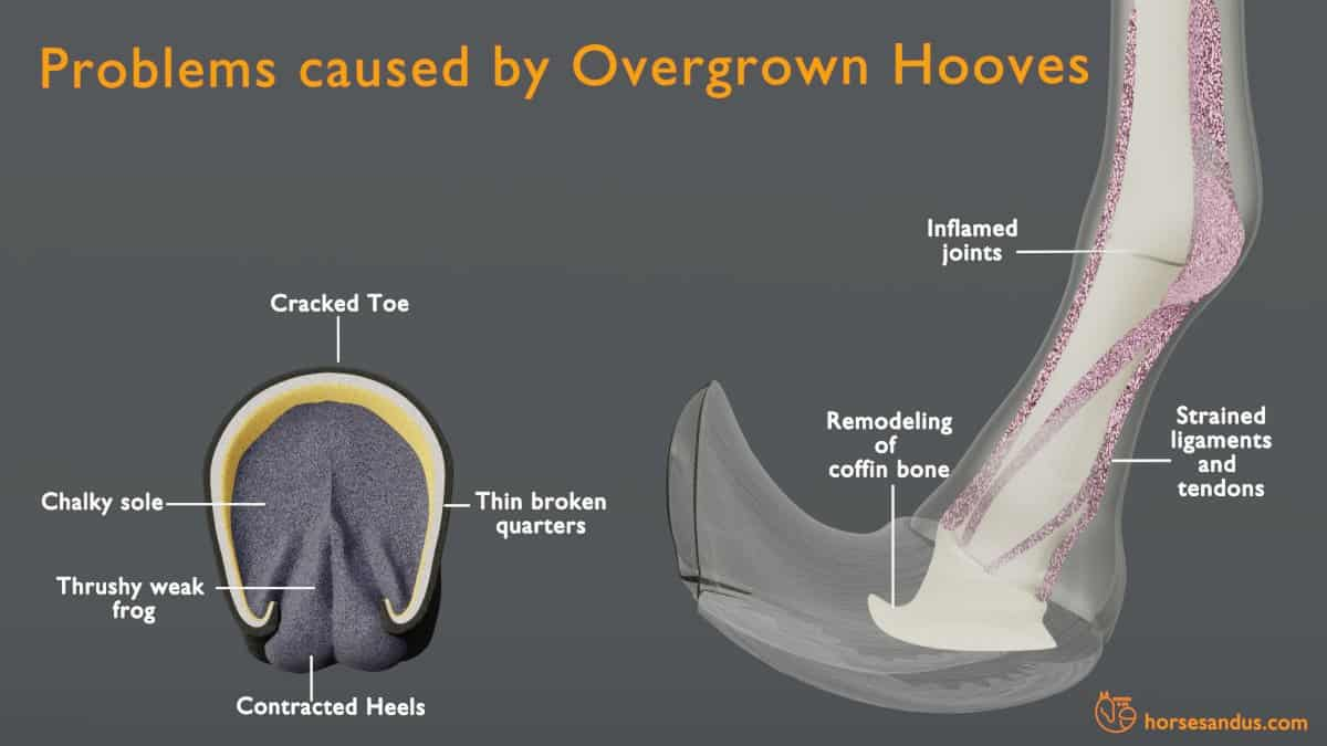 problems caused by overgrown horse hooves