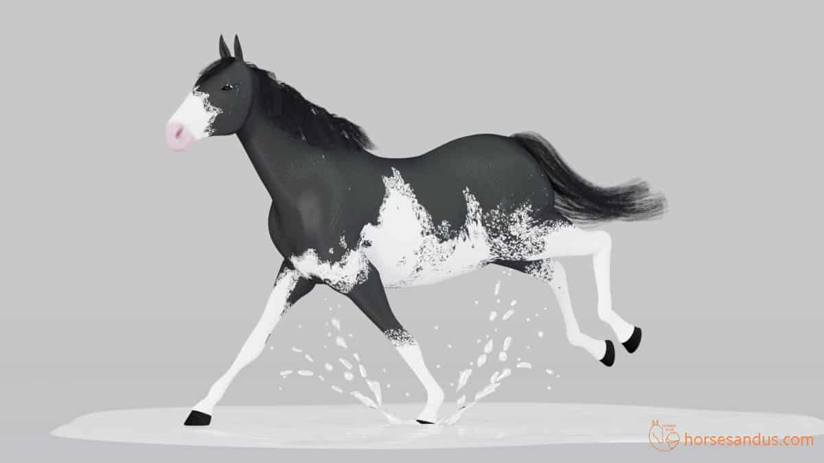 Sabino horse white pattern looks like horse ran over puddle of white paint