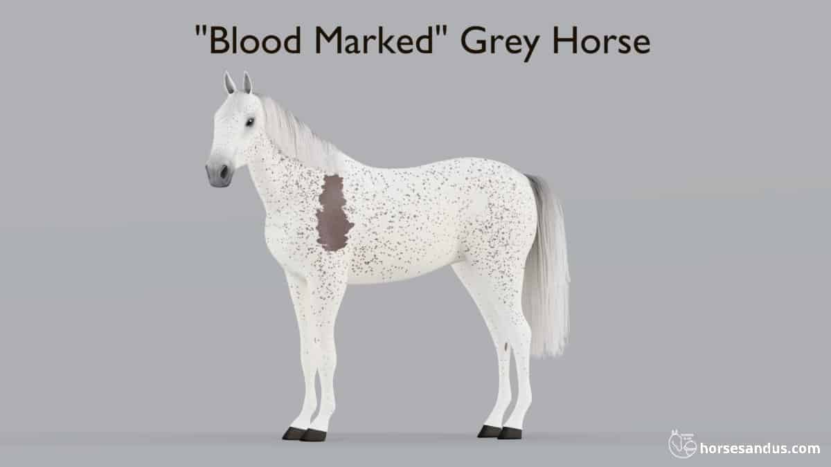 Blood Marked Grey Horse