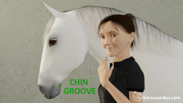 horse chin groove
