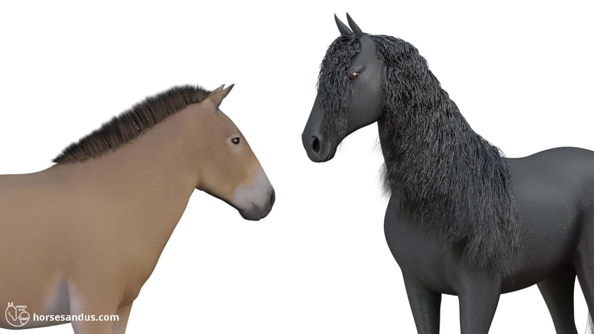 why do horses have manes (short manes vs long manes)