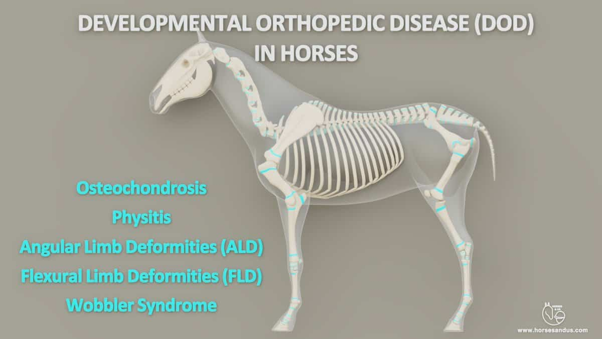 Equine Developmental Orthopedic Disease