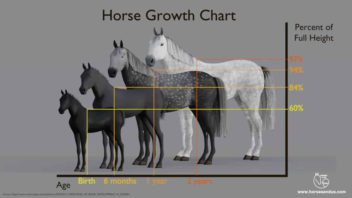 Horse growth chart - percentage of full horse height by age