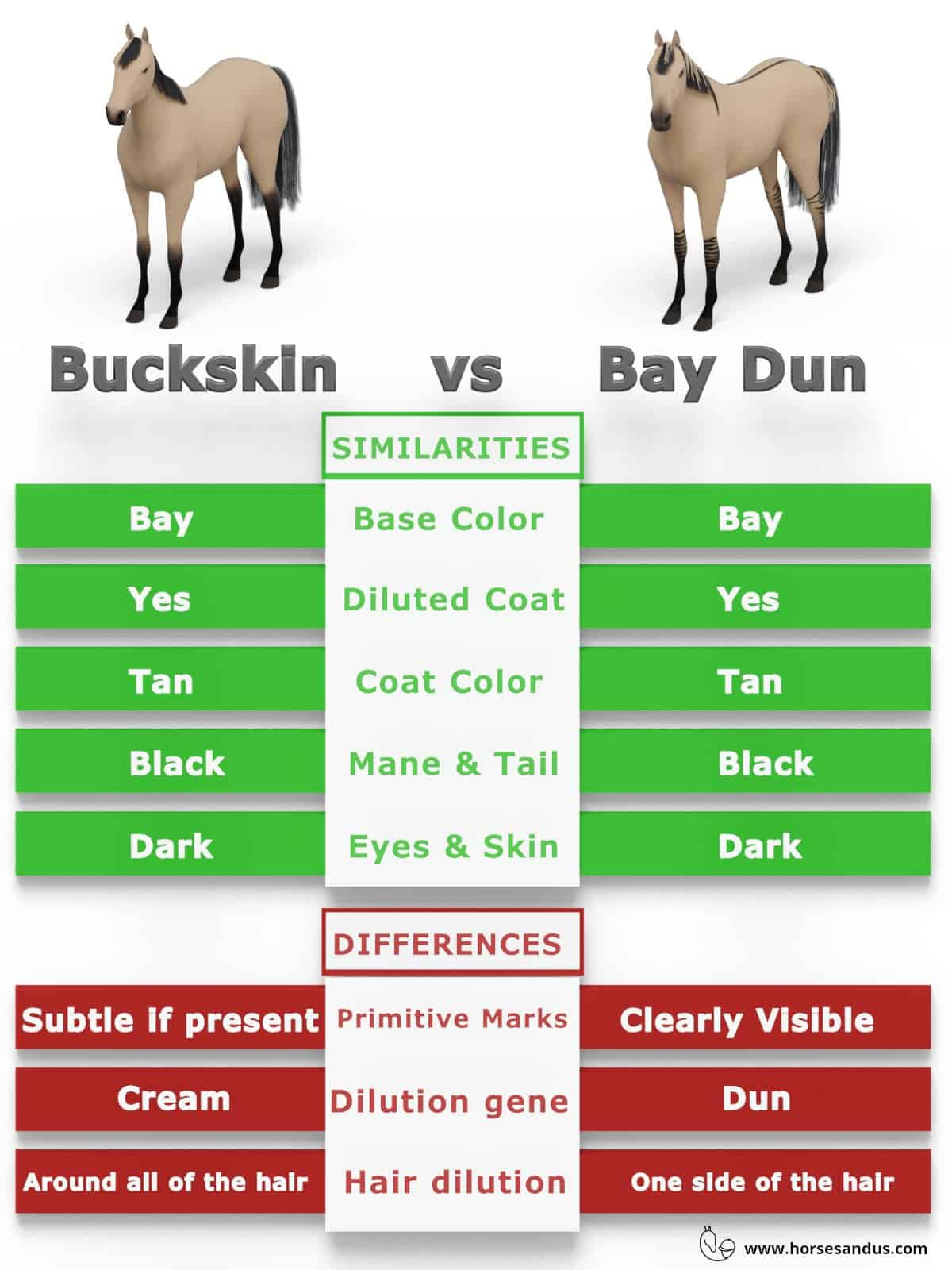 Buckskin vs Bay Dun horses - what are the differences