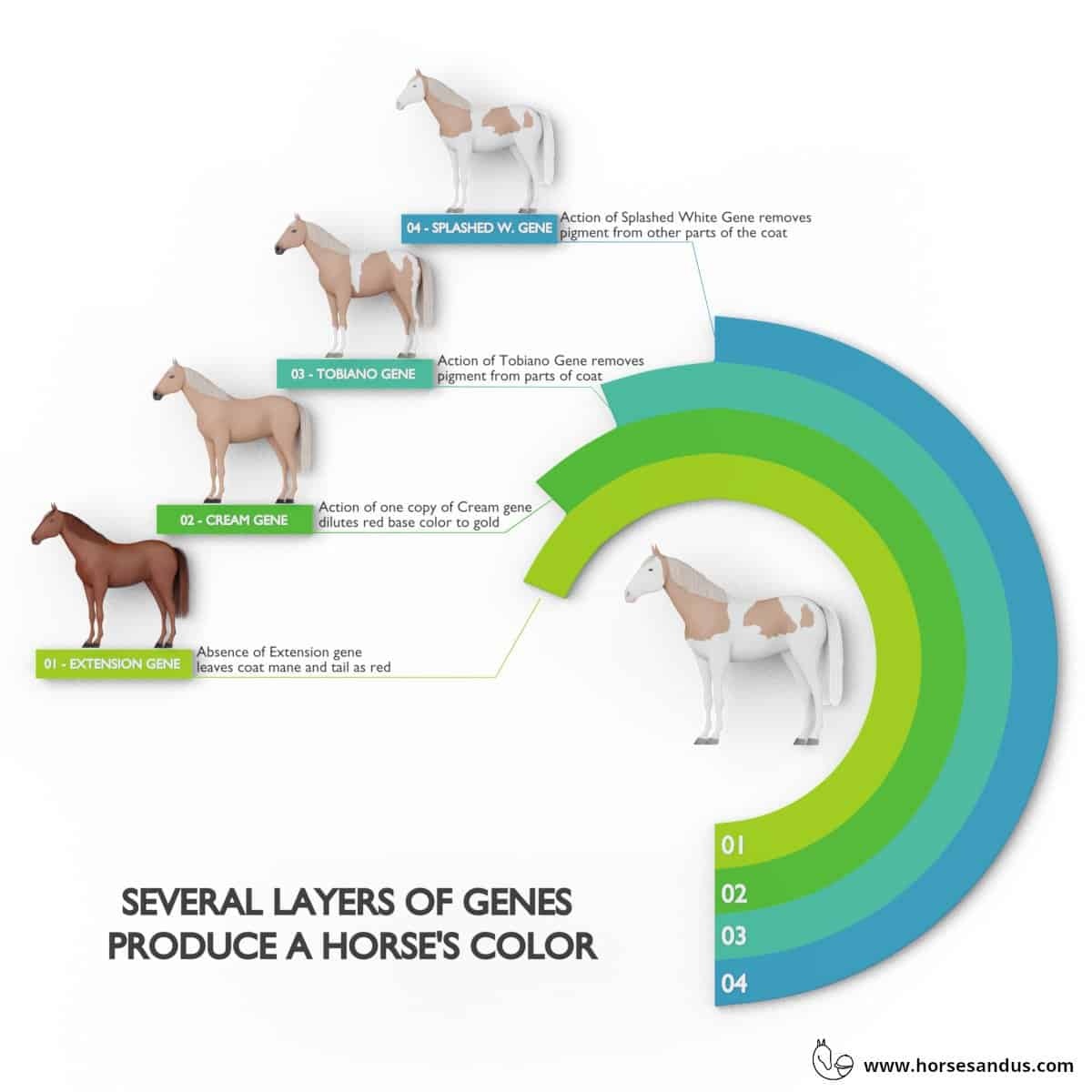 Horse color and pattern - result from several layers of genes