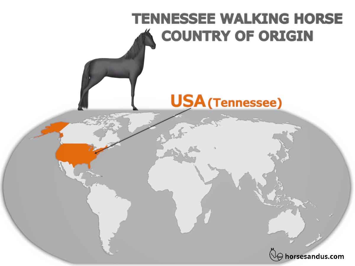 Tennessee Walking horse's country of Origin - USA (Tennessee)