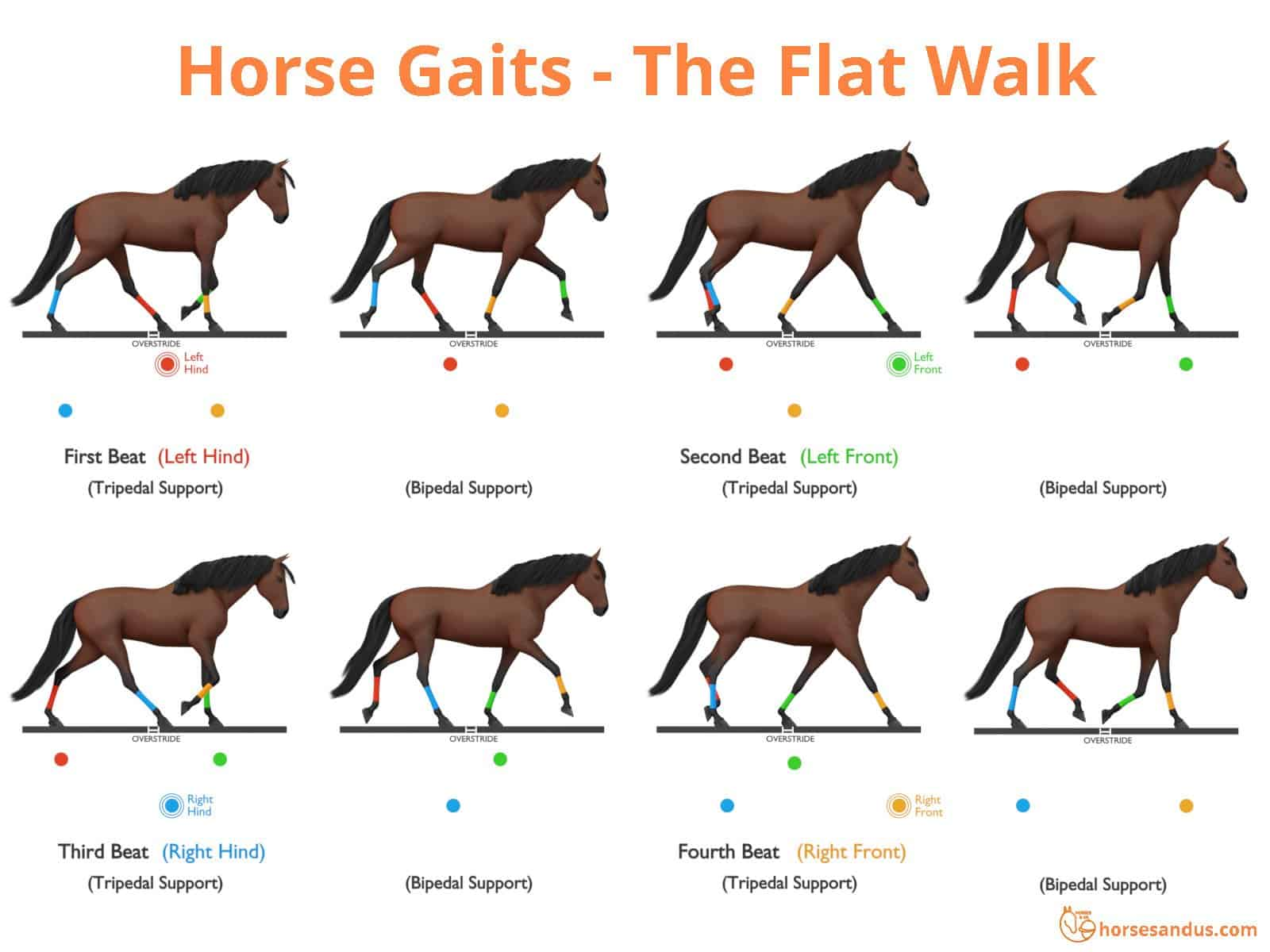Sequence of footfalls for the Flat Foot Walk - Tennessee Walking Horse