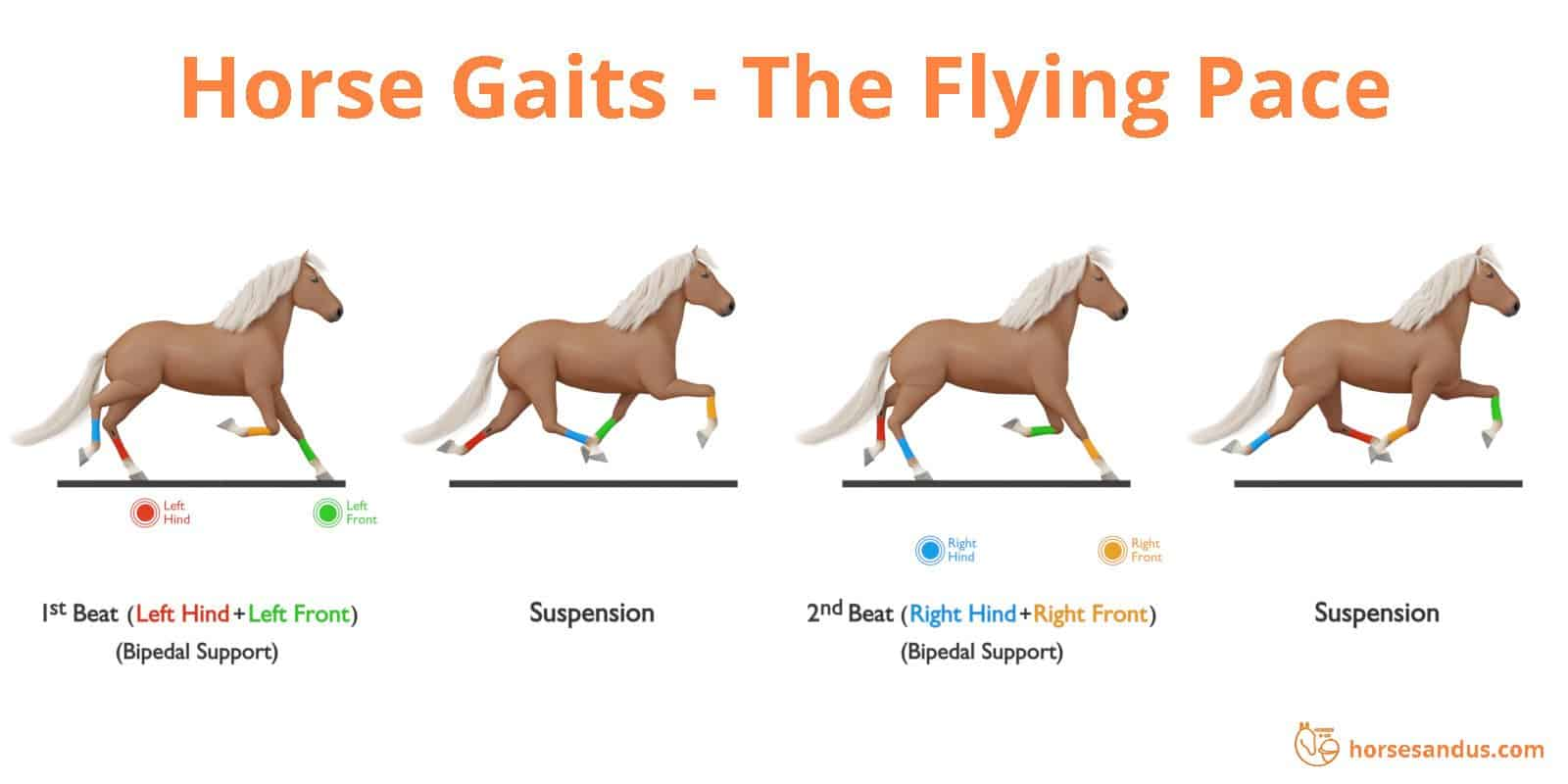 Sequence of footfalls for the flying pace gait - Icelandic horse