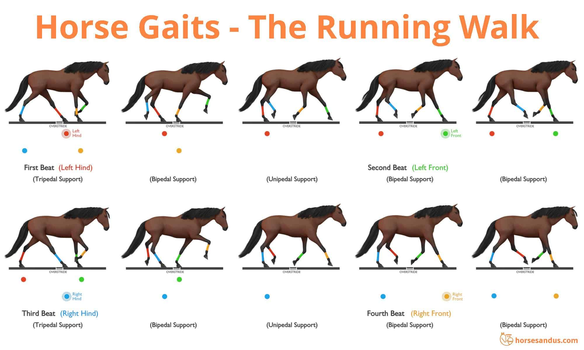 Sequence of footfalls for the Running Walk - Tennessee Walking Horse