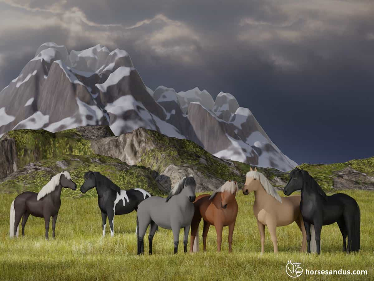 Icelandic horses in their natural envirornment